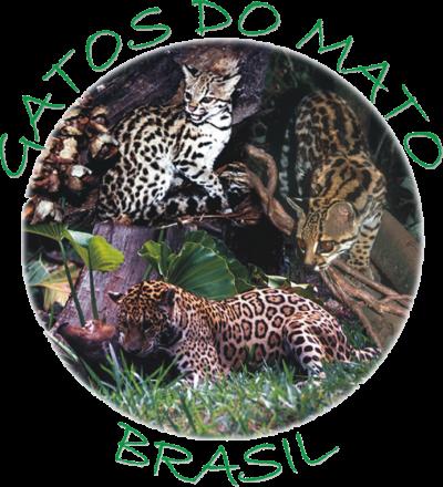 Gatos do Mato Brasil com muitas novidades!!!!
