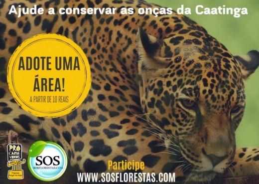Ajude a conservar as onças da Caatinga